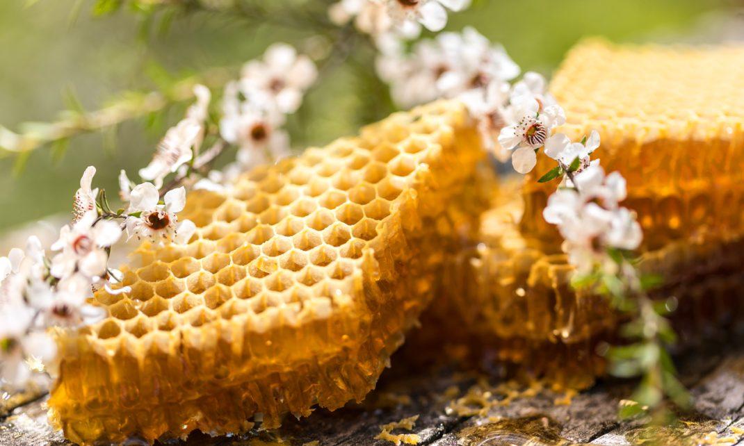 Nzstory Honey 12 Nzte Honey2806