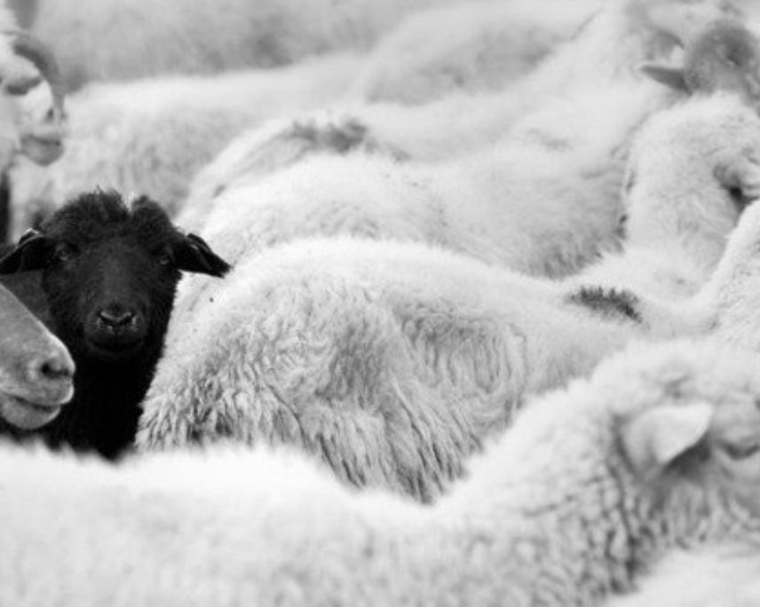 Black sheep: A cult gathering at Shepherd
